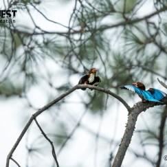 kingfisher meeting at delhi