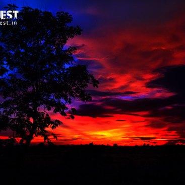 Last_sunset at tadoba