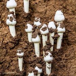Mushroom Photography at tadoba