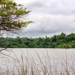 Lake at Tadoba Andhari Tiger Reserve