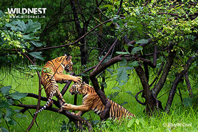 tadoba weekend getaway 3 days tour