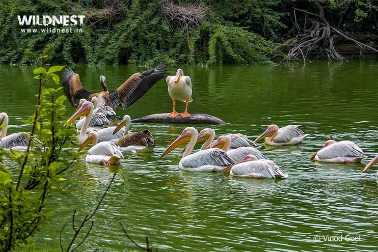birding near Delhi at Delhi zoo