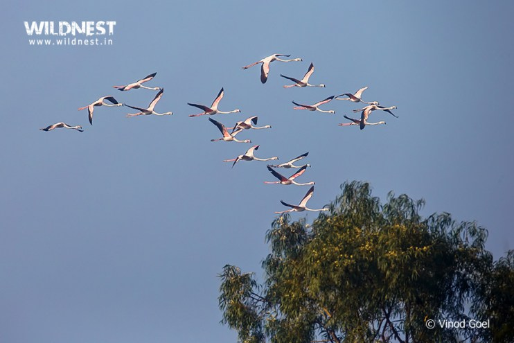 Birding Near Delhi at Dighal Wetlands