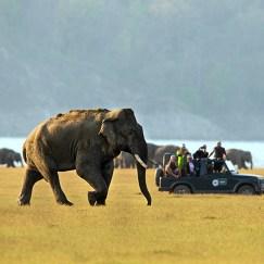 Wildlife Safaris in India