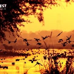 gulls at delhi