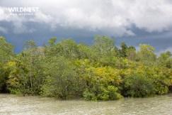 mangroves at Sundarbans Tiger Reserve