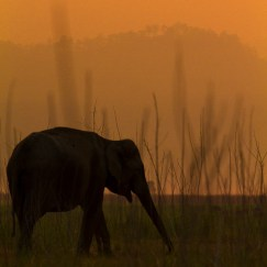 baby elephant at corbett tiger reserve