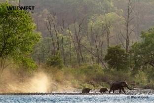 elephant in habitat at corbett tiger reserve