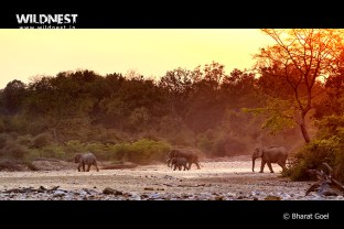 elephant photography at corbett tiger reserve