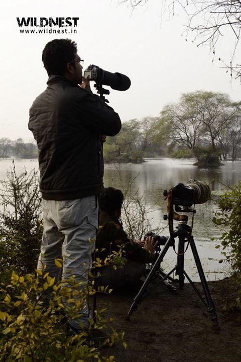 Wildlife photography at Keoladeo Ghana National Park