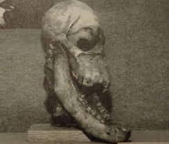 何だこれ!?一つ目の頭蓋骨出土の謎!!オーストラリアに残る伝説とは??
