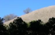 Cheeseboro Canyon Trail