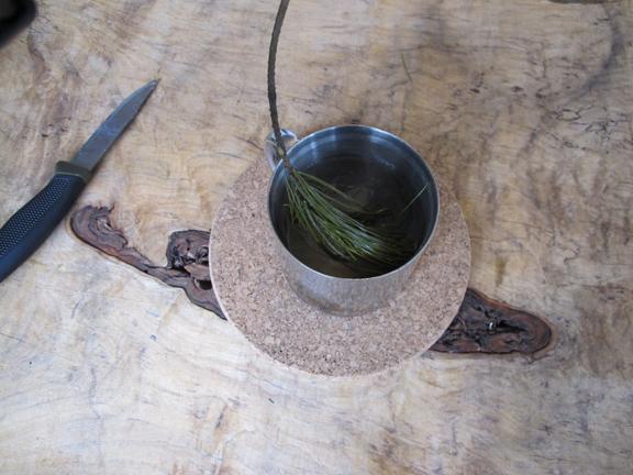 Pine Leaf Tea Pine-needle-tea