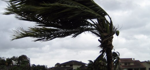 palm tree, by fred green