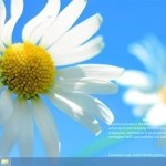 Windows Blue - Vier Apps nebeneinander