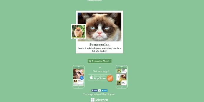 Microsoft-App Fetch! für iOS und Web kann Hunderassen erkennen