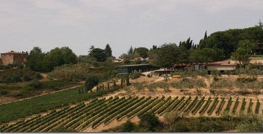 I Balzini vineyards