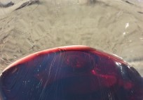 Sonoma Coast with glass of Pinot