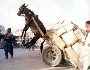 Heavy load mule