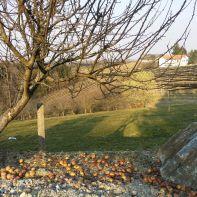 Ausblick auf einen Weinberg in der Nähe von Jaßnitzhöhe