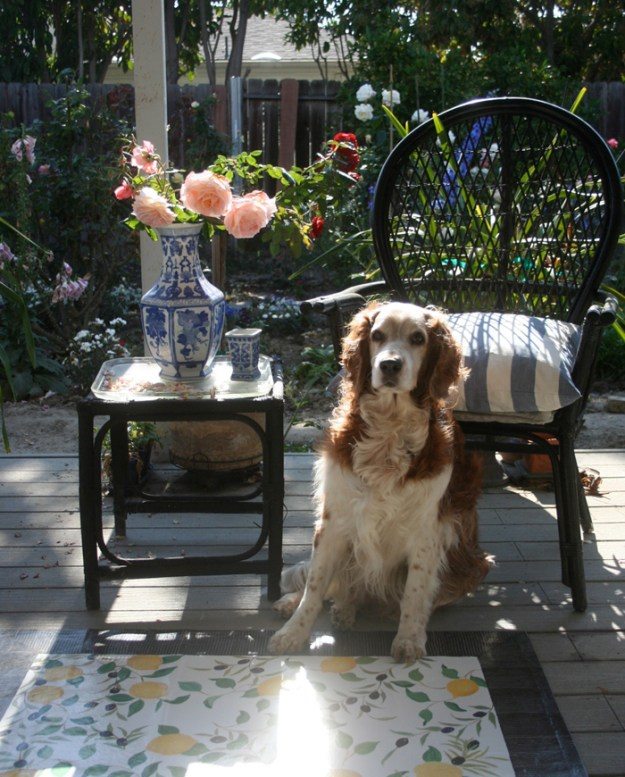 Winslow the welsh springer spaniel on the veranda of Califonia Artist Cathy Hatfield