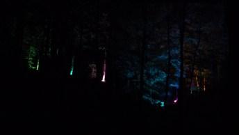 Lichterfest_Baumwipfelpfad