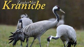 Kalenderblatt_Zauber_der_Kraniche