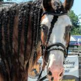 braided clyde