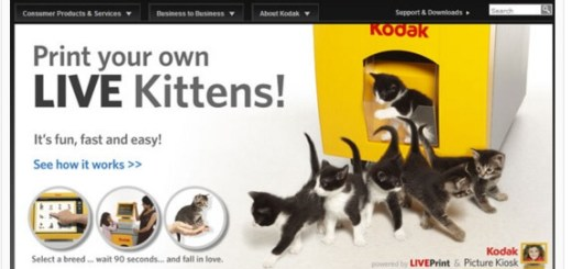 print your own kittens