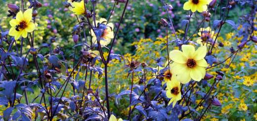 yellow-and-blue-flowers
