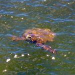 Hello, Turtle