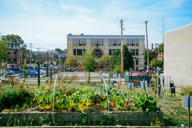 Homewood YMCA Garden by Quelcy 04