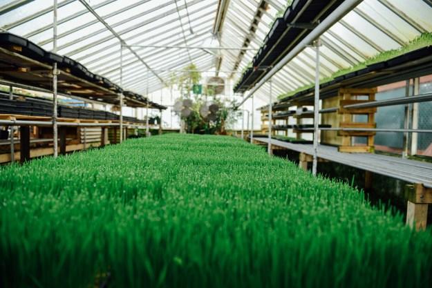Growing Power Organic Urban Farm, Milwaukee, WI // www.WithTheGrains.com