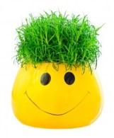 grass in a fun pot