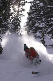 skiing through trees