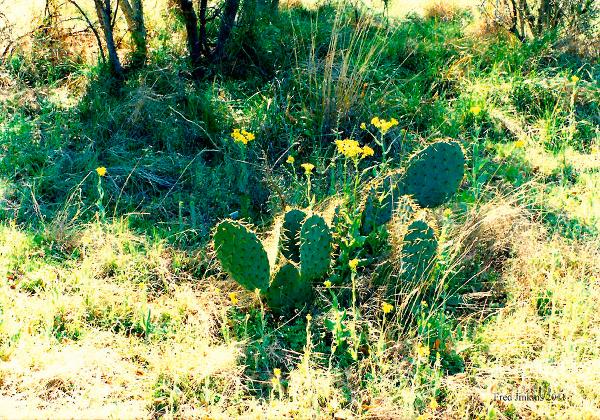 wild-cactus-Mojave