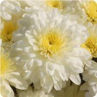 whitemum