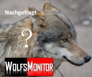 Wolf im Tierpark (Foto: Vogler)