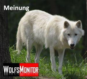 Wolf im Wildpark Lüneburg (Foto: Vogler)
