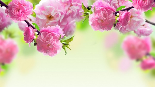 pictures-of-flowers16