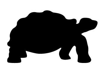 1-113 Desert Tortoise Shadow Pattern