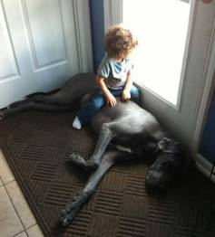 great-dane-and-toddlers