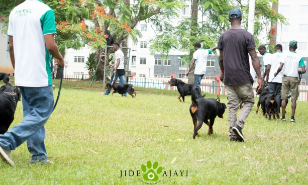Rottweiler picnic 1
