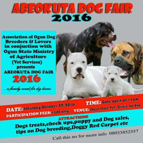 abeokuta-dog-fair-1