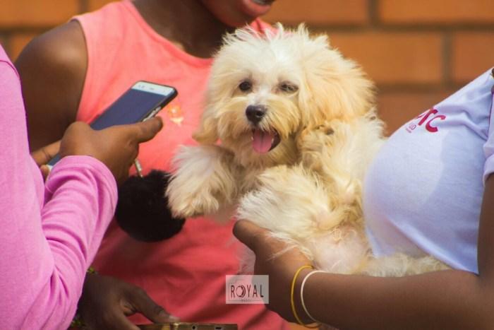 Pent Dog Show 2017 Ghana 6