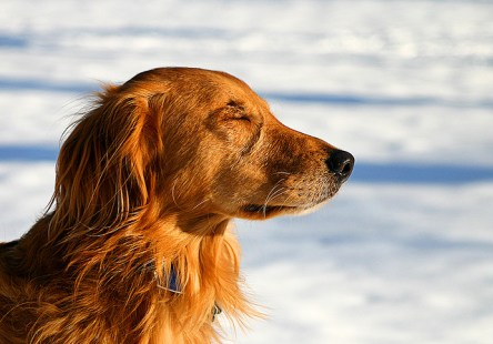 mindful dog