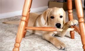 Five practical training hacks to control negative dog behavior