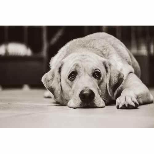 Medium Crop Of What Is A Bait Dog