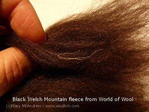 Black Welsh Mountain sheep wool, nice variation of fibers but some white hairs too.