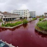 Why this river turned blood-red overnight?